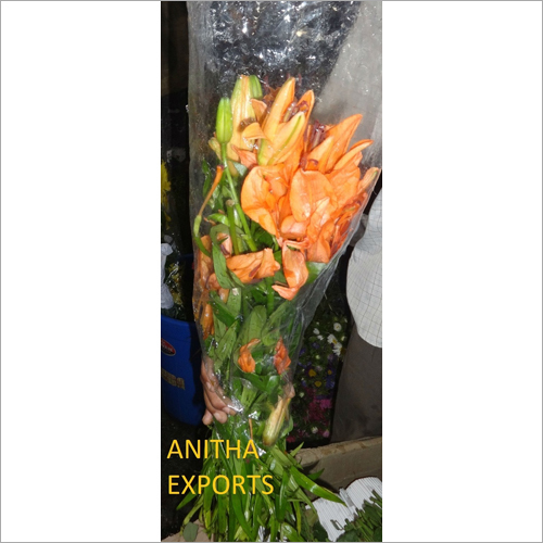 Orange Oriental  Lily