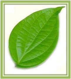 Betel Leaf Powder