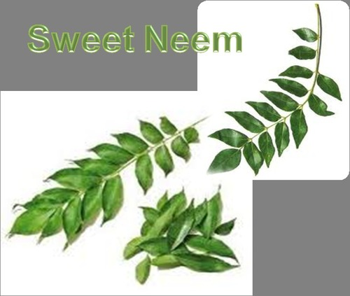 Dried Sweet Neem