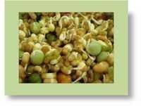 Sprouted Grains