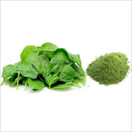 Freeze dried Spinach Powder