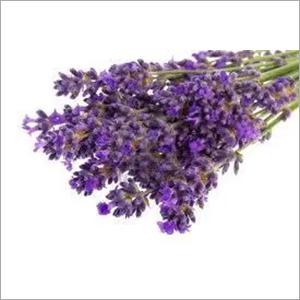 Lavender Flakes