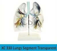 Lungs Segment Transparent