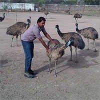 EMU Care