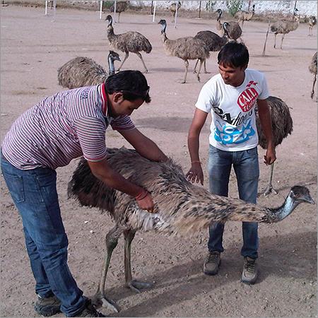 EMU Diagnosis