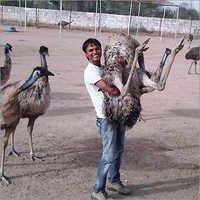 EMU Catch
