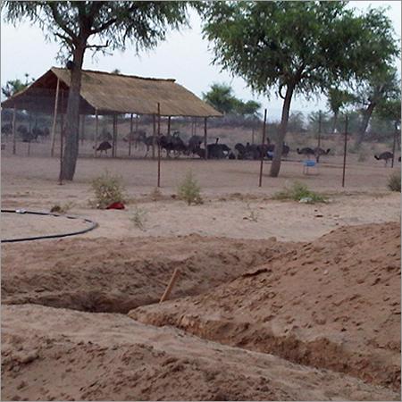EMU Farm