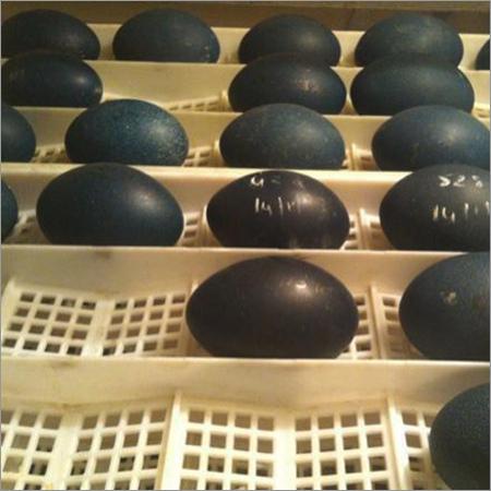 EMU Egg Trays