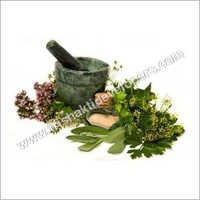 Herbal & Medicinal Plants