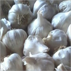 Pure Garlic