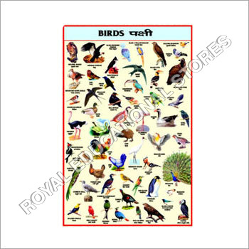 Birds Pictures Chart