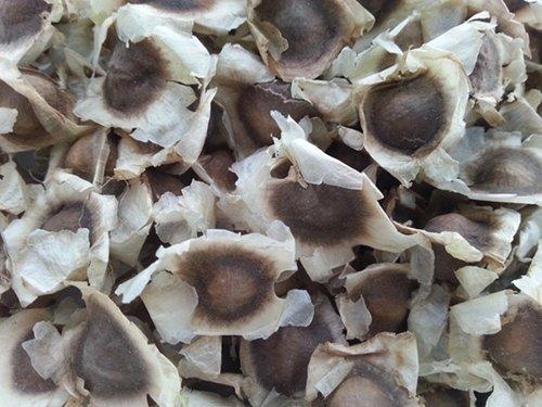 Dry Moringa Oleifera Seeds