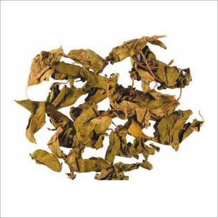 Gymnema Sylvestre Dry Leaves
