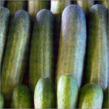 Cucumber - EVERGREEN VEGETABLE TRADERS, Pakapole, Polerhat Road