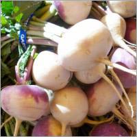 Turnips Root