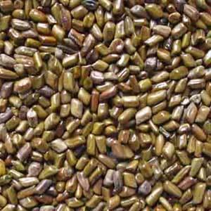 Pamar (Cassia Tora Seeds)