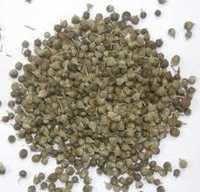 Sambhalu Seed