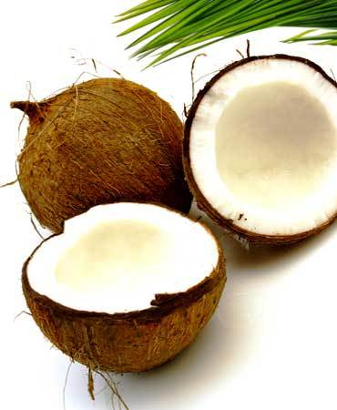 Fresh Shell Coconut
