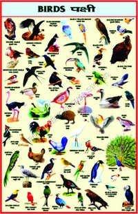 CHARTS-BIRDS