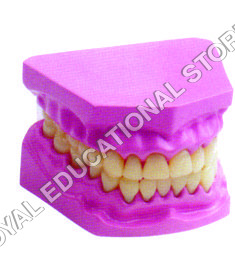 DENTAL MODEL-SMALL