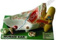 EAR-FIBRE