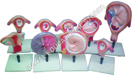 HUMAN EMBRYO-SET OF 9