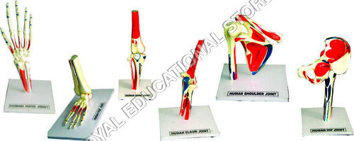 HUMAN JOINTS-SET OF 6