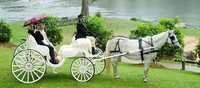 Wedding Two Seater Horse Carriage