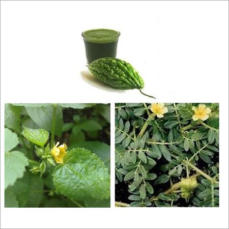 Healthy Herbal Juice
