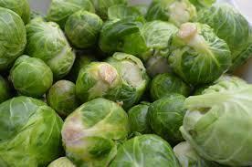 Cabbage Lettuce