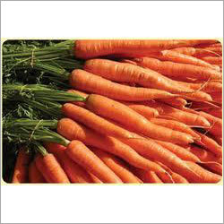 Orange Red Carrot