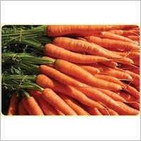 Orange Red Carrot