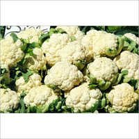 Fresh Cauliflowers
