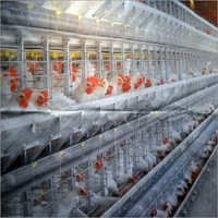Battery Cages for Layer Hens