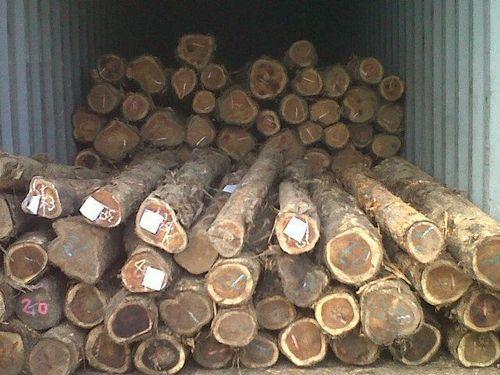 Teak Wood Round Logs