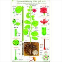 Typical Plant (Parts Of Flowering Plant) Chart