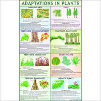 Adaptation In Plants Chart