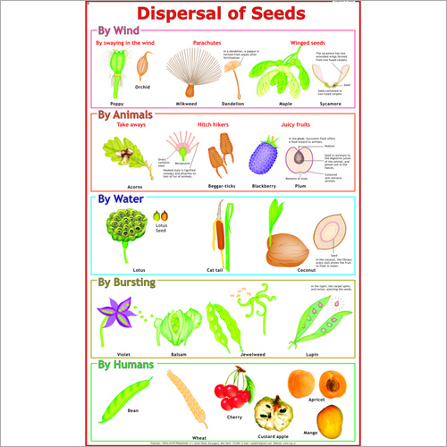dispersal of fruits and seeds