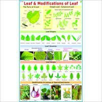 Leaves & Modifications of Leafs Chart
