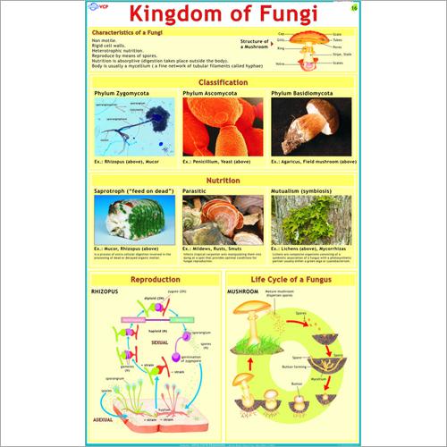 Types of Fungi Chart