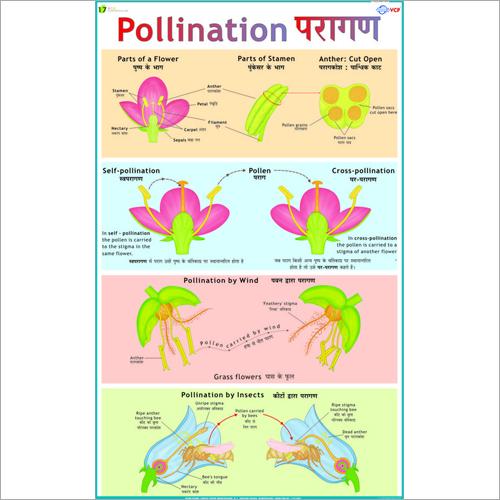 Pollination Chart