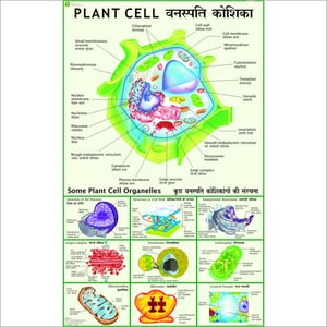 Plant Cell (Under electron Microscope)
