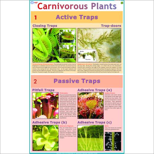 Carnivorous Plants Chart