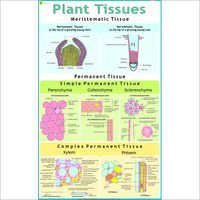 Plant Cell & Tissues