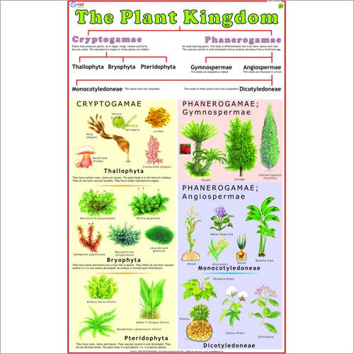 Classification Of Plant (Plant Kingdom) Chart