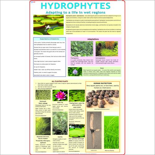 Hydrophytes Chart