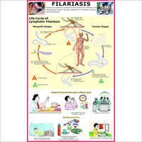 Filariasis (Life Cycle of Roundworm) Chart