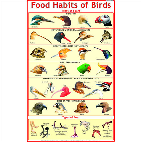 Food Habits of Birds (Beaks & Feet) Chart