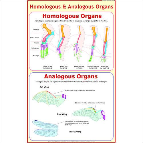 Analogous & Homologous Organs Chart