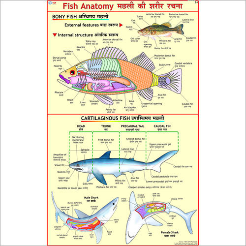 Fish Anatomy